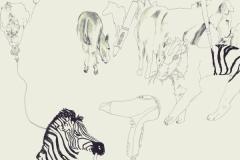 Zebras1internet